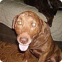 Adopt A Pet :: CJ - North Jackson, OH