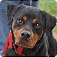 Adopt A Pet :: Rambo--a Sweetie! - Belleville, MI