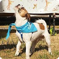 Adopt A Pet :: Rooster - Huntsville, TN