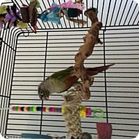 Adopt A Pet :: Bobo - Punta Gorda, FL