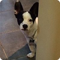 Adopt A Pet :: Tucker - Freeport, NY
