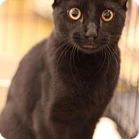 Adopt A Pet :: Fig Newton - Sacramento, CA