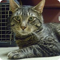 Adopt A Pet :: Bubba - Hamburg, NY