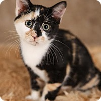 Adopt A Pet :: Ruby - Eagan, MN
