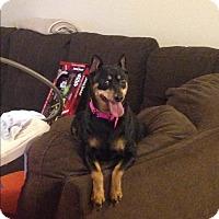 Adopt A Pet :: Nina - Daleville, AL