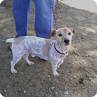 Adopt A Pet :: Totes - San Francisco, CA
