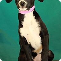 Adopt A Pet :: MuMu - Waldorf, MD
