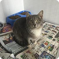 Adopt A Pet :: Zelda - Bishopville, SC