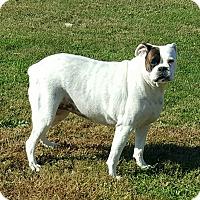 Adopt A Pet :: Lilly - Elyria, OH