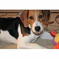 Adopt A Pet :: Annie - Spring Valley, NY