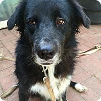 Border Collie Mix Dog for adoption in McDonough, Georgia - Josie