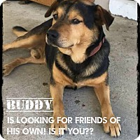 Rottweiler/Labrador Retriever Mix Dog for adoption in Burlington, North Carolina - Buddy