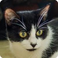 Adopt A Pet :: Venus - Medford, MA