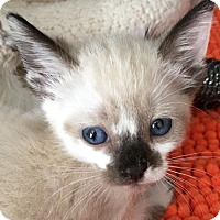 Adopt A Pet :: COAL - Lakewood, CA