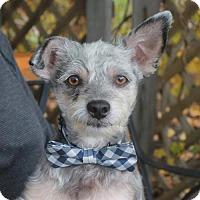 Adopt A Pet :: Rickie-PENDING - Garfield Heights, OH