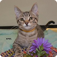 Adopt A Pet :: April - Independence, MO