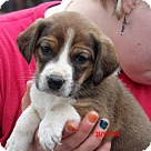 Adopt A Pet :: Fiona (3.5 lb) Video!