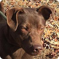 Adopt A Pet :: Rufus - Washington, DC