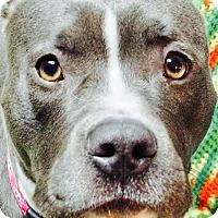 Adopt A Pet :: Geisha - Columbia Heights, MN