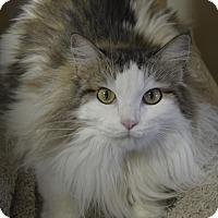 Adopt A Pet :: Momo - Germantown, TN