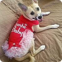 Adopt A Pet :: Kimberleigh - Alexandria, VA