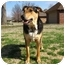 Photo 2 - Shepherd (Unknown Type) Mix Dog for adoption in Ponca City, Oklahoma - Wynter