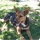 Adopt A Pet :: Roxana