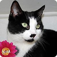 Adopt A Pet :: Nina - River Edge, NJ