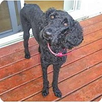 Adopt A Pet :: Gracie - Rigaud, QC