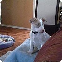 Adopt A Pet :: JACKIE - Torrance, CA