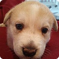 Adopt A Pet :: Faith - Elkhart, IN