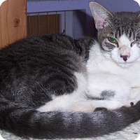 Adopt A Pet :: Popeye - Whittier, CA