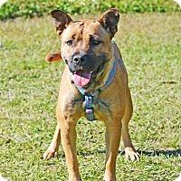 Adopt A Pet :: Laney - Fort Valley, GA