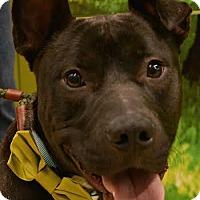 Adopt A Pet :: Blake - Rockaway, NJ