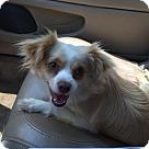 Adopt A Pet :: Gabby