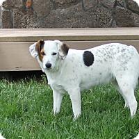 Adopt A Pet :: Jake - Family Dog! - Bend, OR