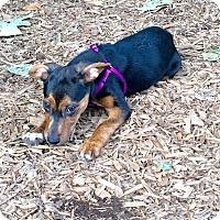 Adopt A Pet :: APPLE - EDEN PRAIRIE, MN