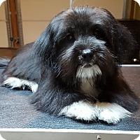 Adopt A Pet :: Motley - Smyrna, GA