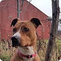 Adopt A Pet :: Princess-Prison Dog - Elyria, OH