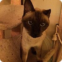 Adopt A Pet :: Rudolph - Delmont, PA