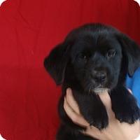 Adopt A Pet :: Andy - Oviedo, FL