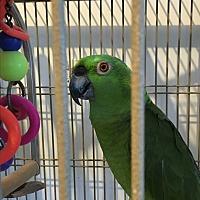 Adopt A Pet :: Bob & Gigi - Punta Gorda, FL