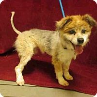 Adopt A Pet :: *SKYLAR - Upper Marlboro, MD