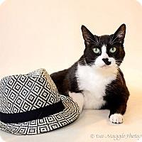 Adopt A Pet :: Annie Stripe - Garden City, MI