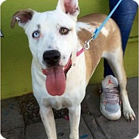 Adopt A Pet :: Mint - Phoenix, AZ