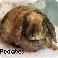 Adopt A Pet :: Peaches - Auburn, CA