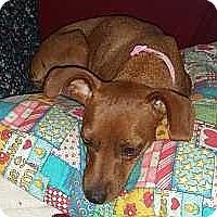 Adopt A Pet :: Gracie - McDonough, GA