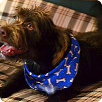 Adopt A Pet :: Quincy - Okeechobee, FL