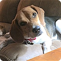 Adopt A Pet :: Mac - Houston, TX