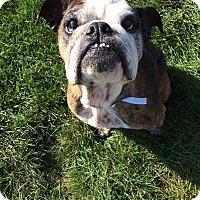 Adopt A Pet :: Roxey - Columbus, OH
